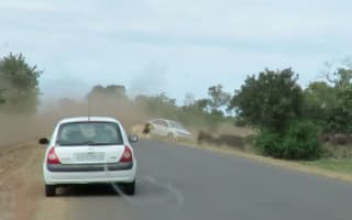 Herd of buffalo chased by lions run into tourist car on safari