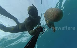 Watch: Octopus attacks spear fisherman
