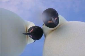 Este selfie de dos pingüinos es lo más adorable que verás hoy