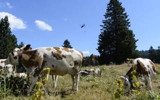 Switzerland 'steals' French water to help thirsty cows