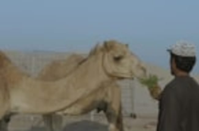 Road Tripping Through Abu Dhabi