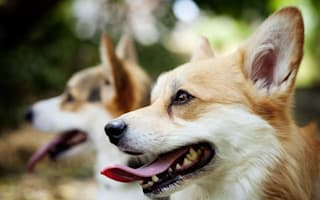 Five buys to keep your dog healthy