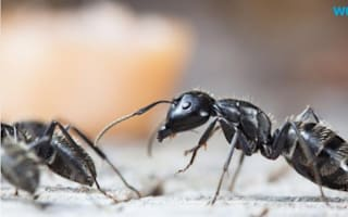 Get rid of ants the easy way