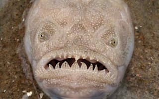This creepy fish was spotted in sand on a popular beach