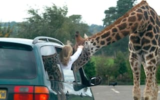 UK safari park slammed for hosting fireworks event