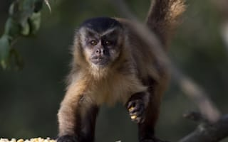 Two monkeys escape from Cumbria zoo