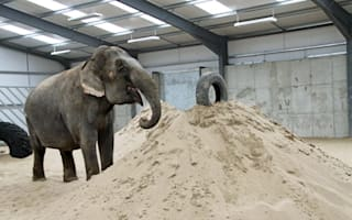 Britain's last circus elephant gets new luxury home
