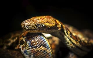 Snake alert in French town as two boa constrictors on the loose