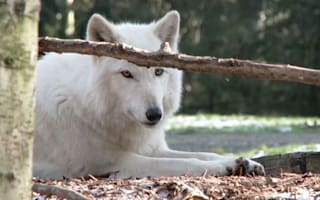 Norway clashes with environmentalists over wolf cull