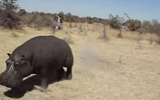 Video: Tourists' terror as angry hippo charges open-top truck