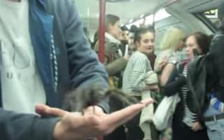 Pranksters release tarantula on packed Tube, terrify commuters