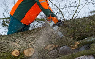 Man forced to pay £28k for chopping down a tree