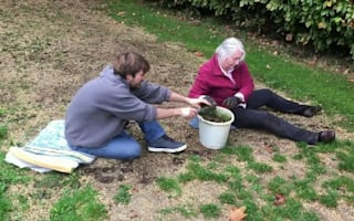 Pensioner arrested for 'theft' of grass