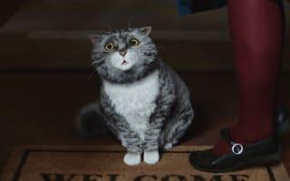 Sainsbury's Christmas advert features Mog the Cat