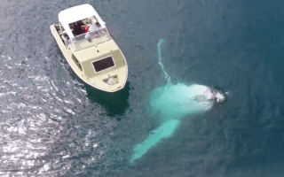Humpback whale swims under tiny fishing boat in amazing video