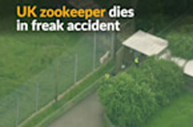Freak accident kills UK zookeeper