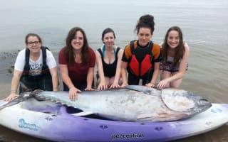 Friends net tuna 'worth £1 million': with one small catch