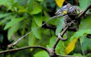 Beautiful photos: ZSL Animal Photography Prize winners revealed