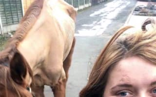 'Skeletal' horse saved after Facebook selfie