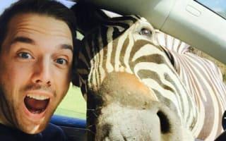 Zelfie! Tourist gets amazing selfie with zebra
