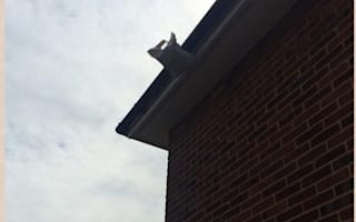 Courier delivery leaves customer climbing the walls