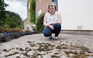 It's raining... seaweed? UK village deluged in beach algae