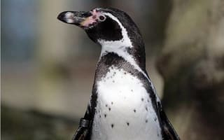 Exmoor Zoo loses all its penguins in malaria outbreak