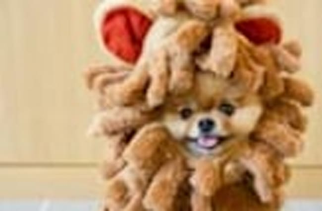 Say Hello to Jiff, The Internet's Cutest Dog