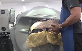 Sick 13-foot alligator gets CT scan for diagnosis