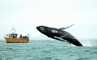 What a picture! Humpback whale sneaks up on tourists in Ireland