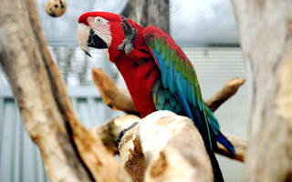 Kent Police stop motorist for driving with a parrot on the steering wheel