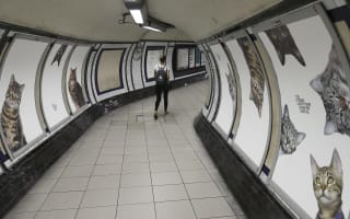 Clapham Common tube station overtaken by pictures of cats
