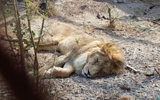Animals starving to death at zoo in Yemen