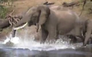 Video: Safari tourist footage of brave elephant attacked by croc