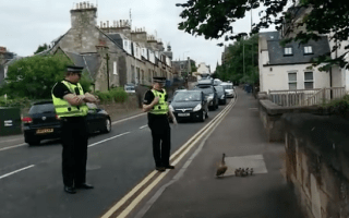 Police escorting family of ducks safely across road is cute (video)
