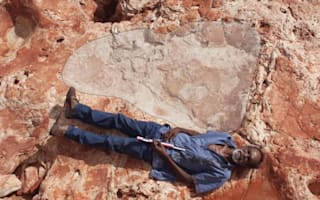 World's largest dinosaur footprint discovered in Australia