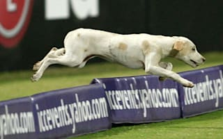 Dog forces early tea in India-England match