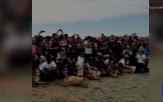 This is a corgi convention on a beach in California (yes, really)