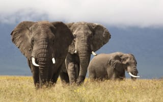 Global wildlife facing 'mass extinction' because of humans