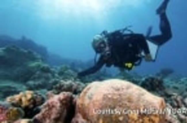 Obama to expand Hawaii marine reserve