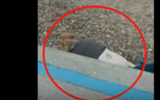 Couple caught having sex 'in front of families' at Clacton-on-Sea beach (video)