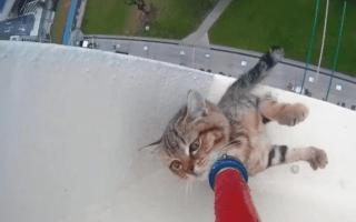 Rescued! Kitten stranded on 12th storey window ledge