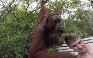 Orangutan climbs onto tourist boat and slaps selfie-taker