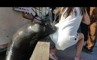 Girl attacked by sea lion treated for 'seal finger disease'