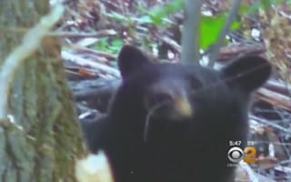 Grandmother mauled by bear asks 911 to 'tell husband I love him'