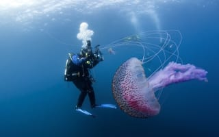 Beautiful but dangerous jellyfish pictured in Scotland