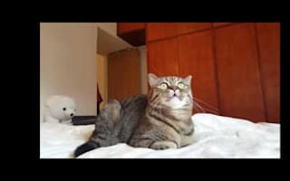 This cat is enchanted by classical music