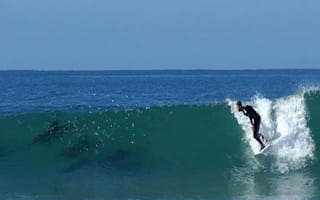 Dolphins seen swimming alongside surfers in South Africa