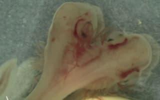 Bizarre two-headed shark stuns scientists