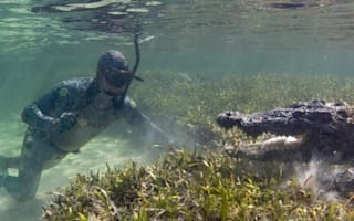 Film makers dress in disguise to swim with giant crocodiles